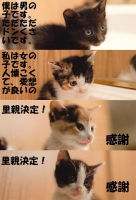 仔猫 2.jpg