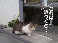 gokinjyo8.jpg